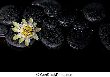 passiflora, 石, 禅, レ, エステ, 花, 概念, 美しい