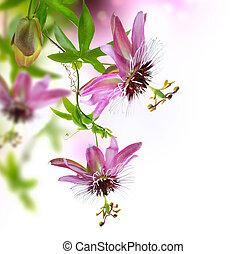 passiflora, bordo, disegno