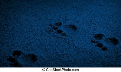 Moving slowly past small animal prints in the dark
