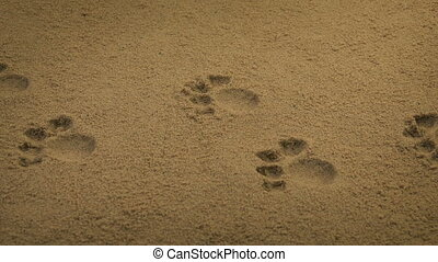 Passing Animal Paw Prints In The Sand - Moving slowly past...
