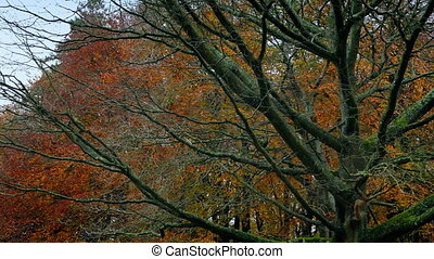 Passing Bare Tree In The Fall - Moving past woodland with...