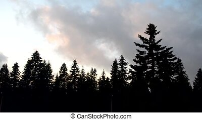 Passing clouds sped up - Silhouettes of coniferous trees and...