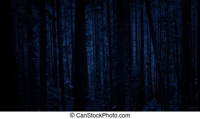 Passing Forest Trees In Snowfall At Night