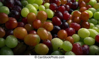 Passing Juicy Mixed Grapes - Tracking shot moving slowly...