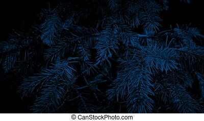 Passing Pine Tree At Night Closeup - Tracking shot moving...