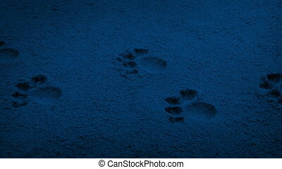 Passing Small Paw Prints In The Dark - Moving slowly past...