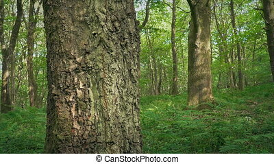 Passing Trees In The Shade In Tranquil Forest - Moving...
