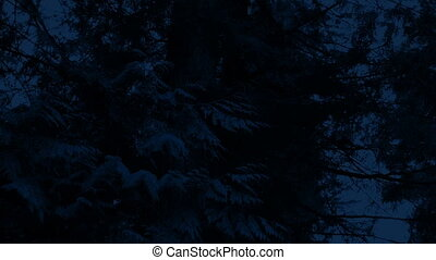 Passing Under Large Forest Trees At Night