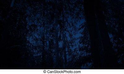 Passing Woodland Trees At Night - Tracking shot moving...