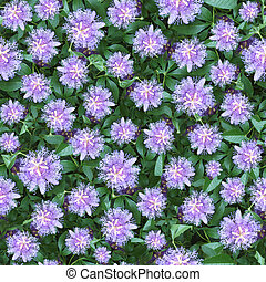 Passion flower seamless composable pattern