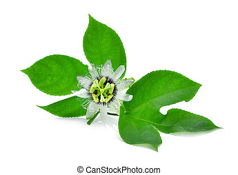 passion flower with green leaves isolated on white background
