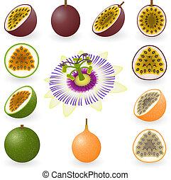 Passion fruit - Vector illustration of maracuja, granadilla...