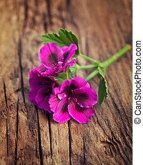 Passionate pink geranium on a vintage wood background