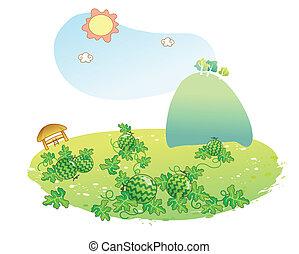pastèque, jardin