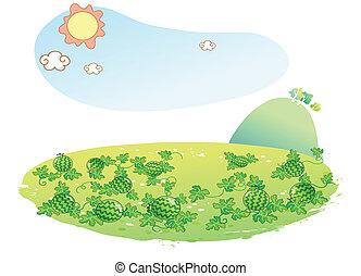 pastèque, jardin, paysage