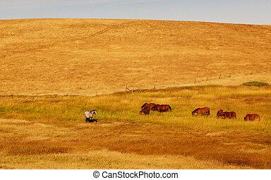 pastar, cavalos, dourado, campo