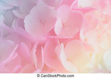 pastel, barbouillage, style, fond, hortensia, doux, couleur