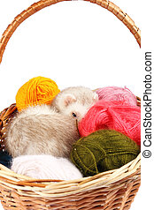 Pastel ferret in basket