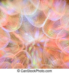 pastel, fleur, vif, coloré, pissenlit, résumé, -, fond