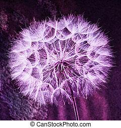 pastel, fleur, vif, pissenlit, vendange, résumé, -, fond