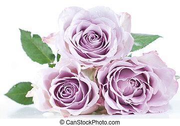 Shot of beautiful tender pastel shade roses