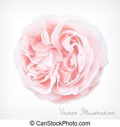 pastel, vecteur, rose