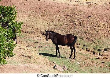 pasto,  andalusian, caballo