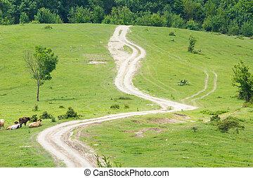 pasto montanha, verde, declive, coberto, com, grama verde, e, arbustos, terra, rastro, paddock, boiada, paisagem rural, dia ensolarado