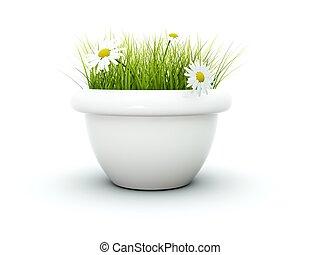 pasto o césped, con, flores, aislado, blanco