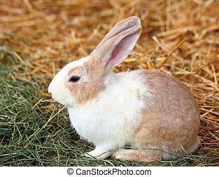 pasto o césped, conejo