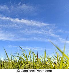 pasto o césped, en el campo, con, cielo azul