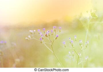 pasto o césped, flor, en, el, pradera, en, luz del sol, naturaleza, plano de fondo, primavera