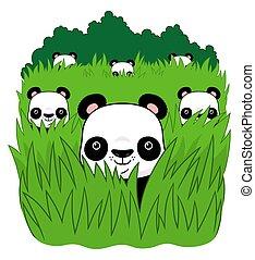 pasto o césped, panda