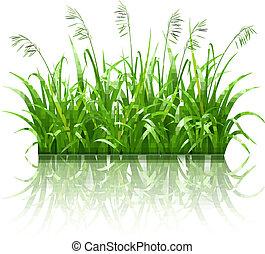 pasto o césped, vector, verde