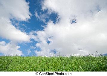 pasto o césped, y azul, cielo