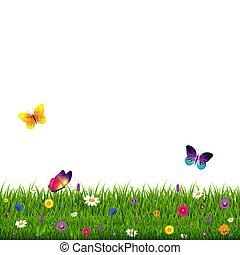pasto o césped, y, flores, fondo blanco