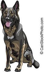 pastor, esboço, cor, raça, cão, alemão, vetorial, pretas