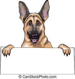 pastor, esboço, cor, raça, cão, alemão, vetorial, sorrizo
