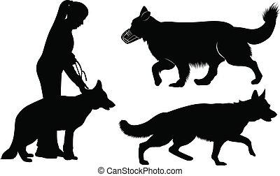 pastor, jogo, alemão, cão, silhuetas, cachorros
