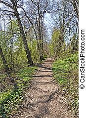 Pastoral green spring path