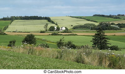 Pastoral Landscape. - Green fields view from scenic lookout....