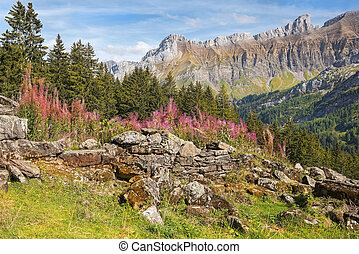 pastoral landscapes in the Swiss Alps