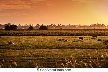 pastoral, sonnenaufgang, niederländisch