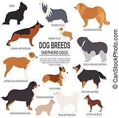 pastore, breeds., set, appartamento, stile, cane, icon.