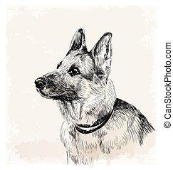 pastore tedesco, cane, ritratto, inchiostro