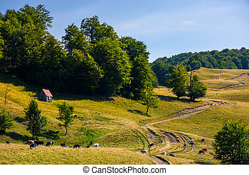 pasture and shed on the hillside. lovely summer landscape of...