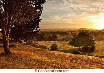 Pasture at sunrise