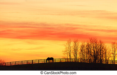 Pasture - Horse grazing on a farm at sunset under dramatic...
