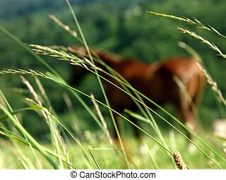 Pasture - Horse in the grass of pasture