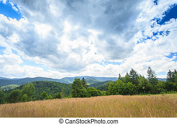 pasture in the mountains for grazing
